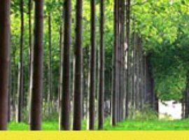 طرح توجیهی درخت پالونیا (پائولونیا)-ویرایش ۱۳۹۸