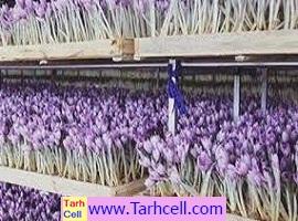 طرح توجیهی گلخانه زعفران-ویرایش ۱۳۹۹